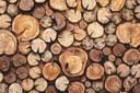 Dalle foreste del Veneto a combustibile per energia pulita